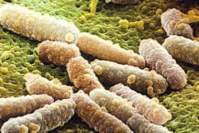 грибок Кандиды